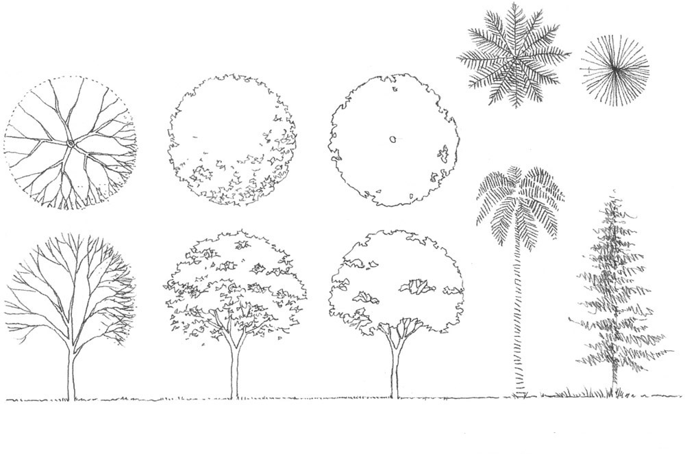 Architecture Drawing Of Trees