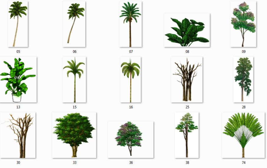 Color Water Trees Collection | Architectural Resources