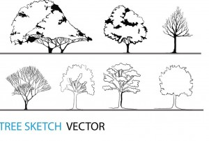 Tree Sketch Vector | Architectural Resources
