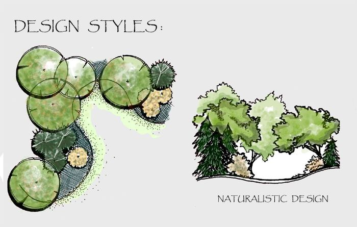 Drawing of a naturalistic style planting plan and section