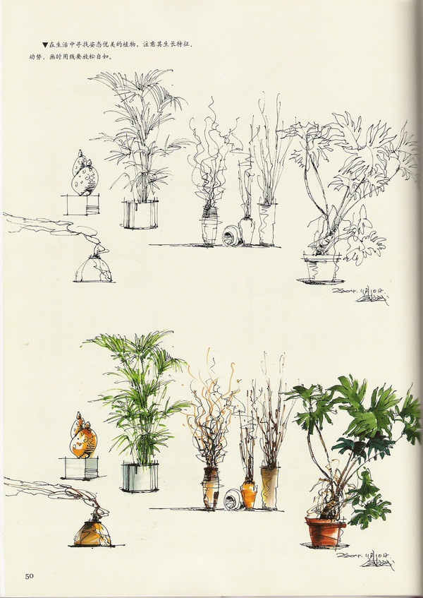 hand renderings plants sketch
